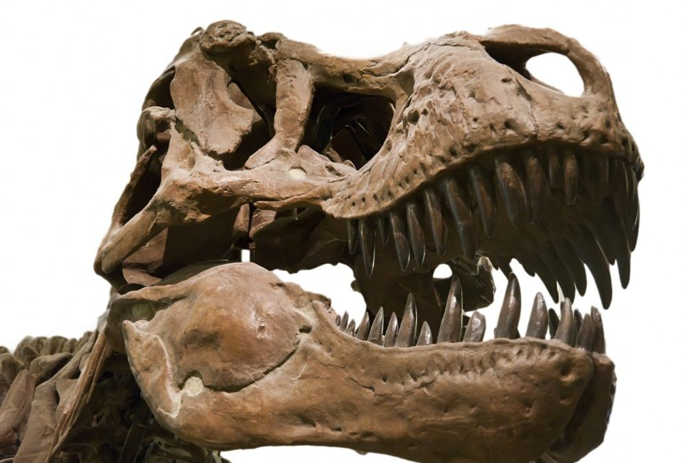 Minneapolis Dentist Competes with T.Rex's Killer Smile