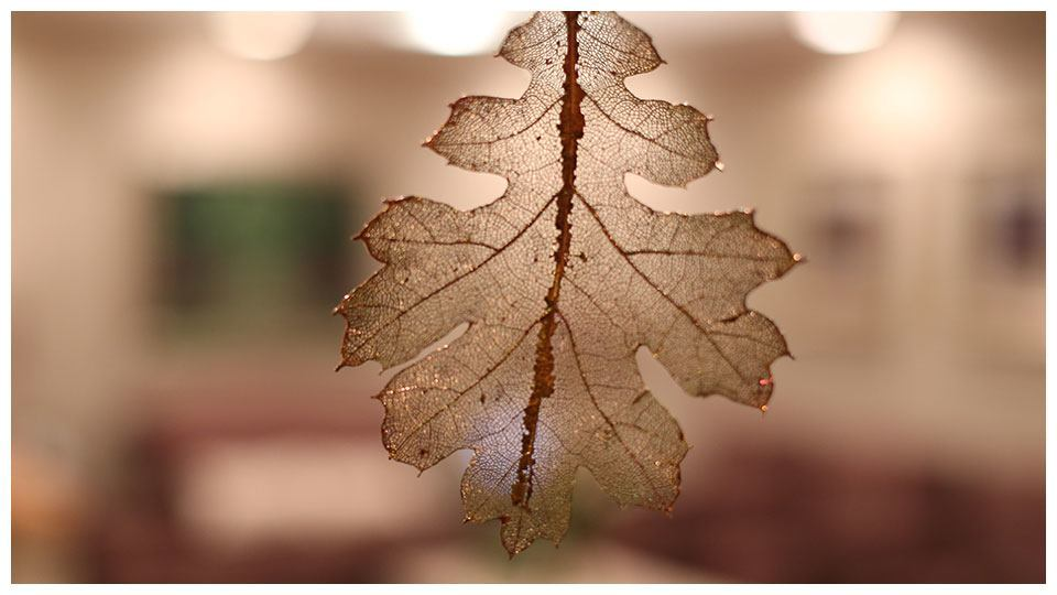 A closeup of a translucent leaf.